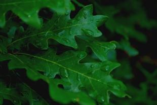 rain covered bush